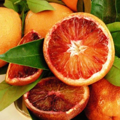 "Апельсин кривавий "" Сангвінелло ""(C. sinensis"" Sanguinello"") 20-25 см. кімнатний"