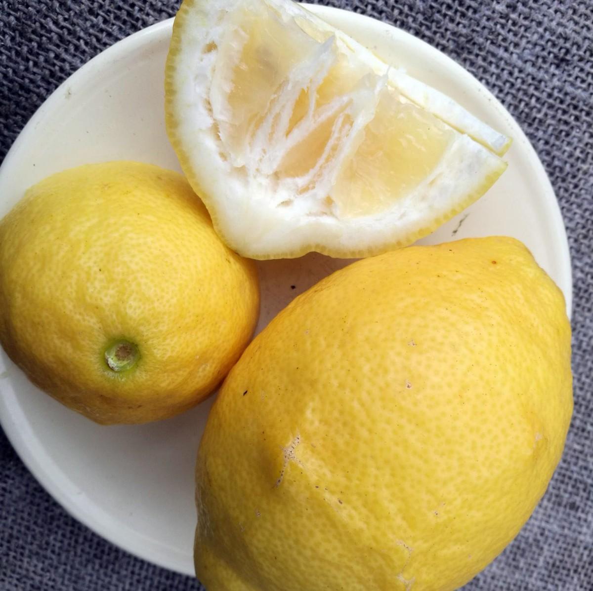 Лимон Овале де Сорренто (Ovale Di Sorrento) до 20 см. Кімнатний