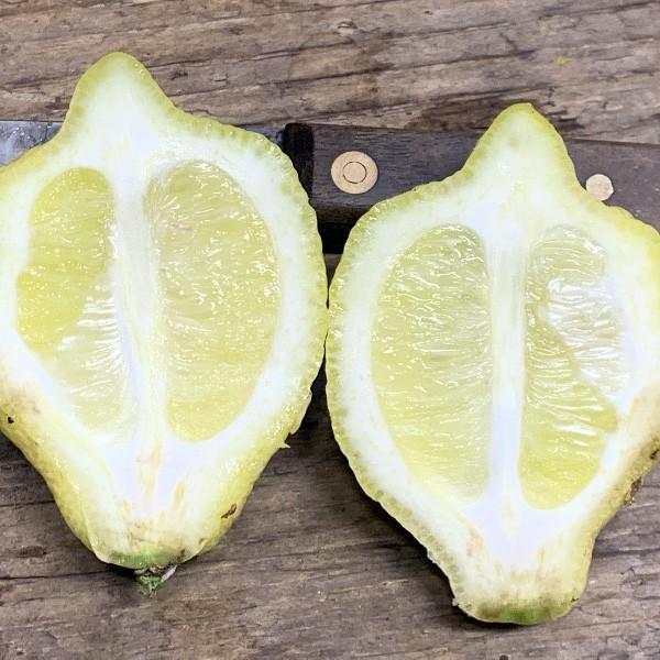 "Лимон ""Каналикулята ди Палермо"" (C. limon ""Canaliculata di Palermo"") 20-25 см. Комнатный"