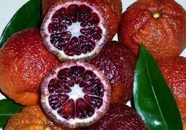 "Клементин "" AMOA8 ""(C. clementina ""amoa8"") з червоною м'якоттю до 20 см. кімнатний"
